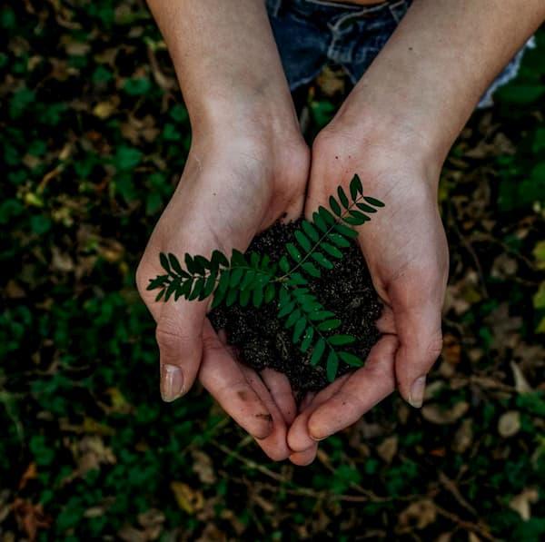 Рубрика «Экология»